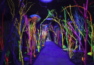 Meow Wolf in Santa Fe New Mexico